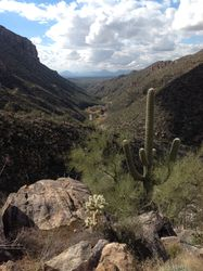 Sabino Canyon Rescreation Area, Phoneline Trail